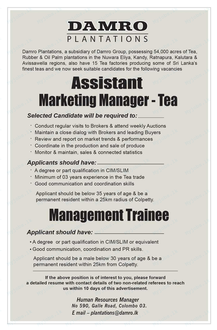 assistant marketing manager - tea jobs in sri lanka